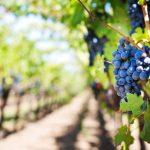 ボジョレーヌーヴォー2017の評価とオススメ銘柄おいしいワインの選び方